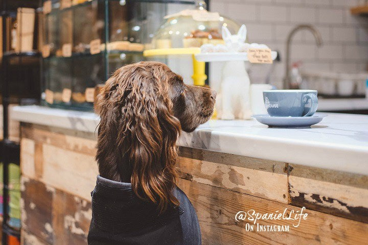 dog in pet shop drinking puppaccino doghouse