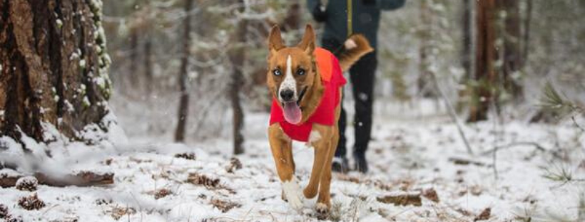 vert jacket by ruffwear for dogs