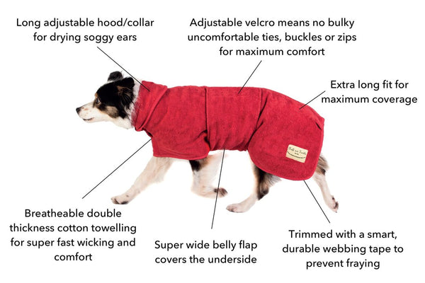collie dog in a red towel