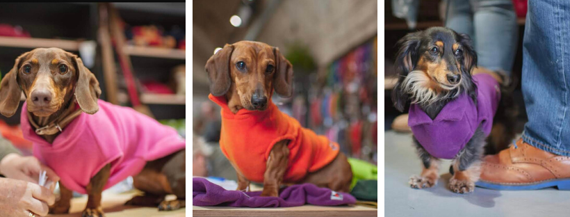 dachshund colourful fleece for dogs warm