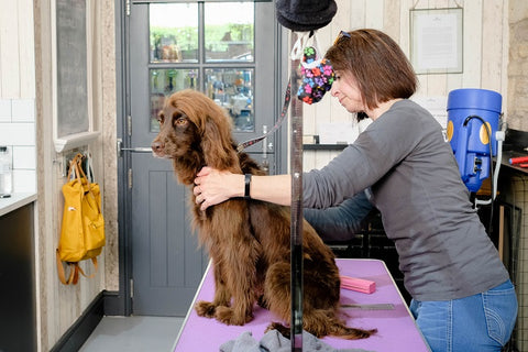 dog grooming in bradford on avon wiltshire