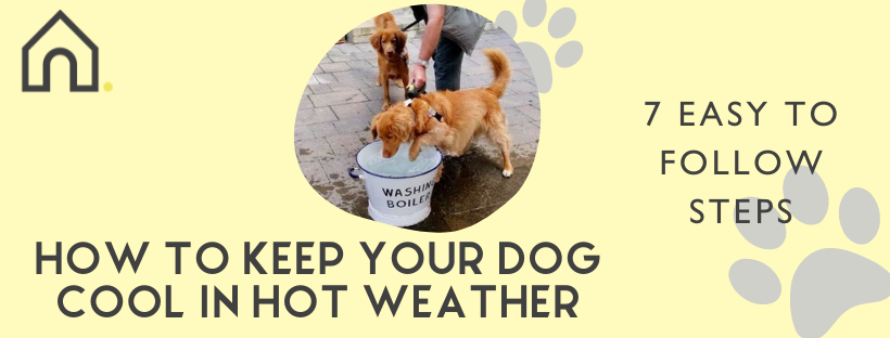 how to cool your dog down