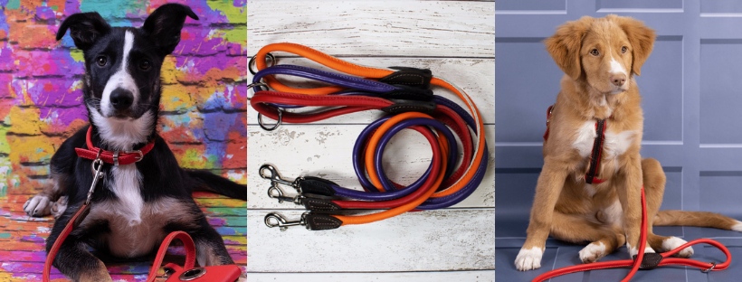 dogs and horses uk rolled leather leads