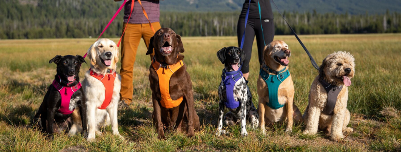 ruffwear front range dog harness - best harness for dogs
