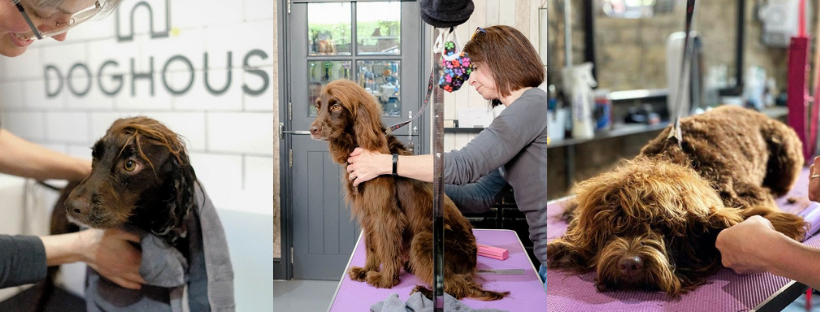 steph and the spaniels grooming