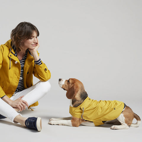 yellow dog coat joules