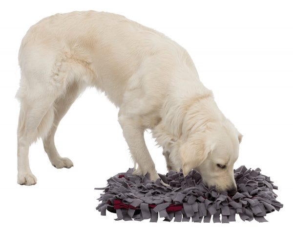 Interactive Sniffing Carpet