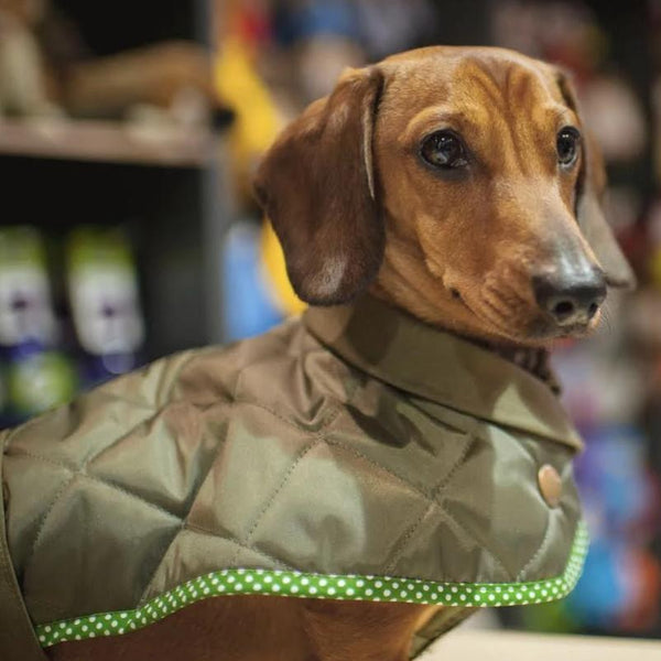 Original Quilted Dachshund Coat - Doghouse