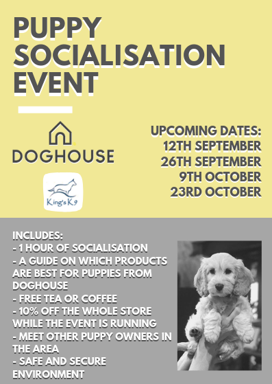 Puppy Socialisation Event - Doghouse