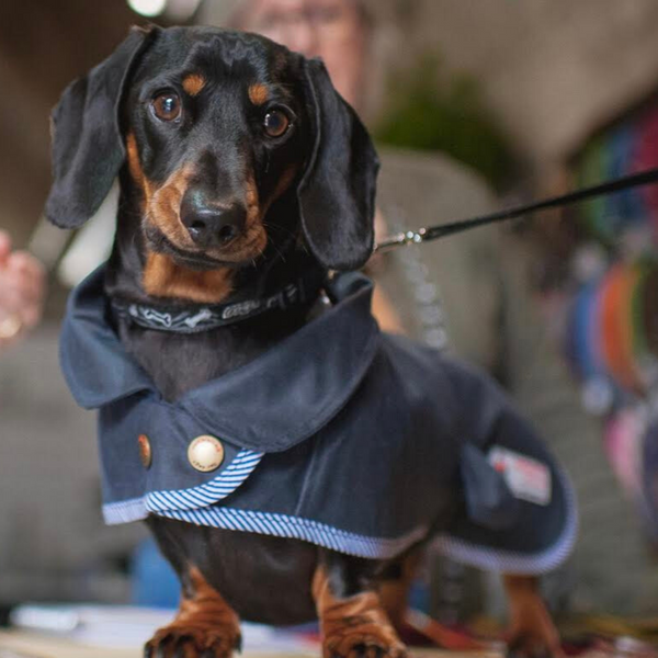 Wax Jacket for Dachshunds - Doghouse