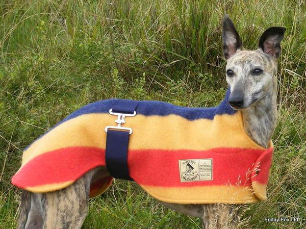 Witney Whippet Rug Coat - Doghouse