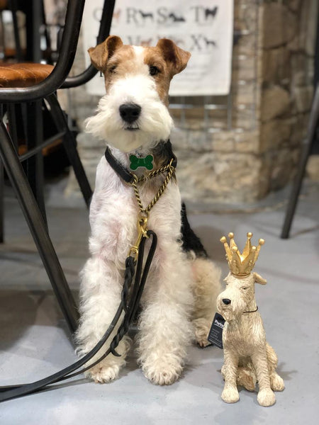 Fox Terrier King Ornament - Doghouse