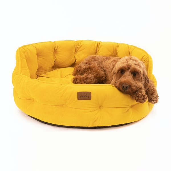 Yellow Velvet Dog Bed