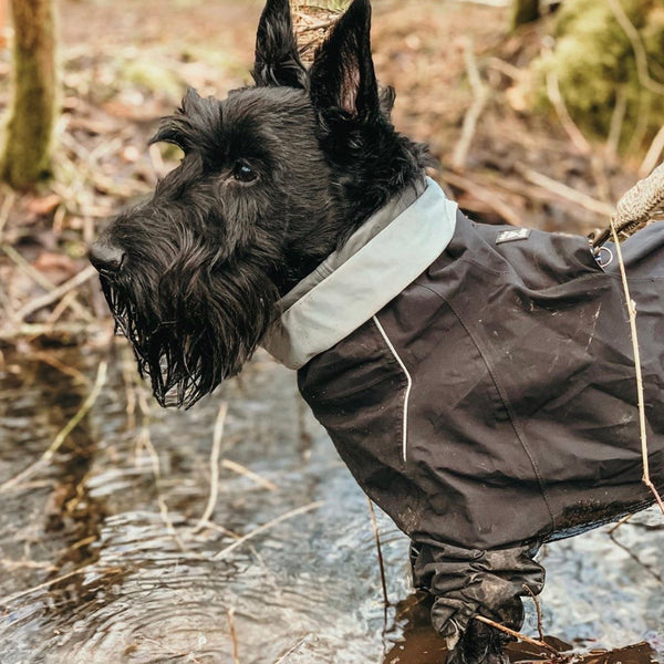 Hurtta Downpour Suit / Overall - Doghouse