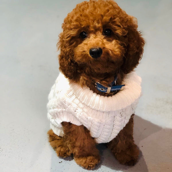 Chunky Cable Knit Dog Jumper - Doghouse