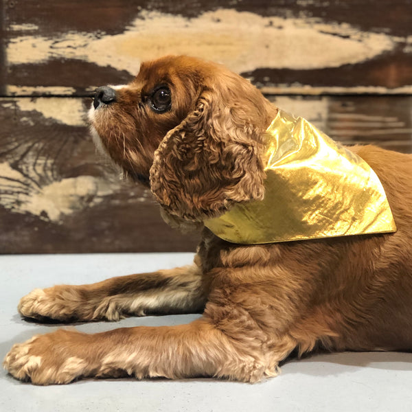 The Grrreat Amy Mattingly Gold Dog Bandana - Doghouse