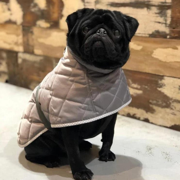 Quilted Dog Coat - Doghouse