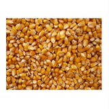 Grains Popcorn Yellow (1x25lb )