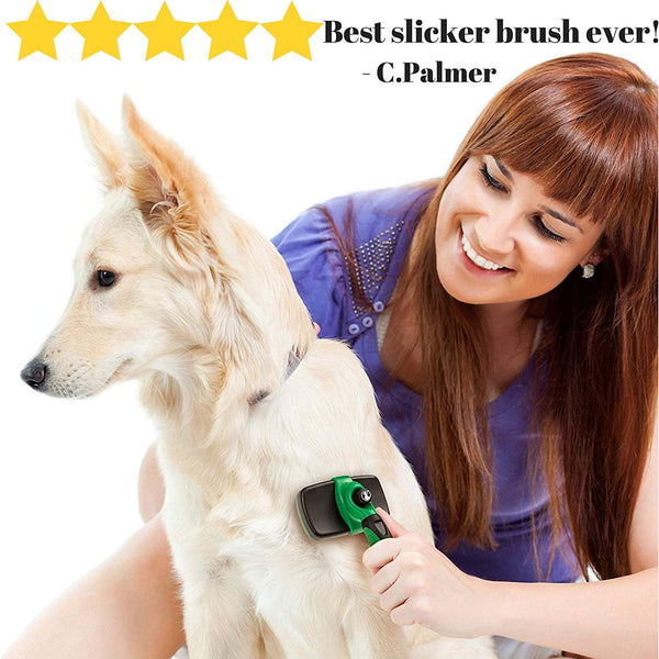 4 Expert Dog Grooming Tips You Need to Start Following