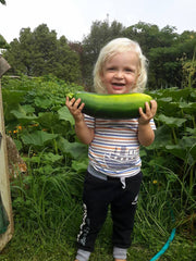 A 2 year old boy standing looking at the camera with a big grin on his face, in his arms he is holding a giant marrow, he is standing in front of a blooming vegetable garden.
