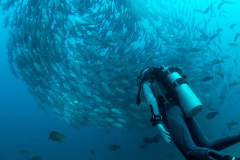 A scuba diver watches on a large school of fish that is circling beautifully