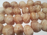 Shells - 40 Large Escargot/Snails Shells for Shelldwelling Cichlids / Tank Decor