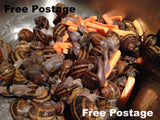 Live Snails ( Reptile Live Food ) - 15 medium size snails