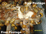 Land snails food - 500gr