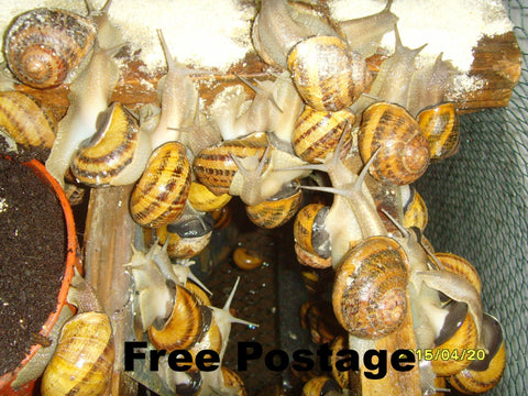 Land snails food - 1000gr