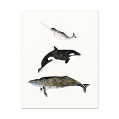 Watercolor Art Print - 3 Whales