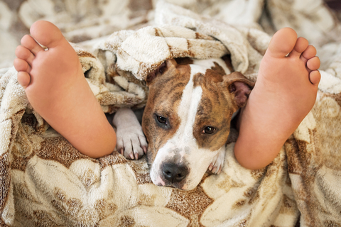 Sleeping With Your Dog? Yay Or Nay - Blog