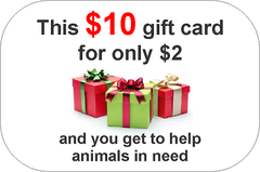 Animals in shelters, rescue animals, animals in need, adopt don't shop, gift voucher