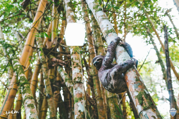 LuminAID Solar Lantern Sloth Sustainability