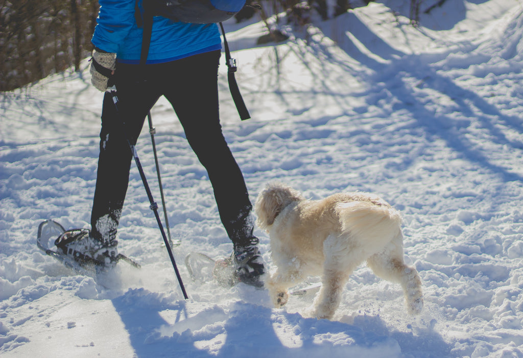 Woman Snowshoeing with Dog