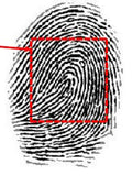 Fingerprint Scanner: MorphoAccess Lite