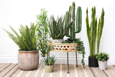 A Forest Weather in the House: Urban Jungle Trend
