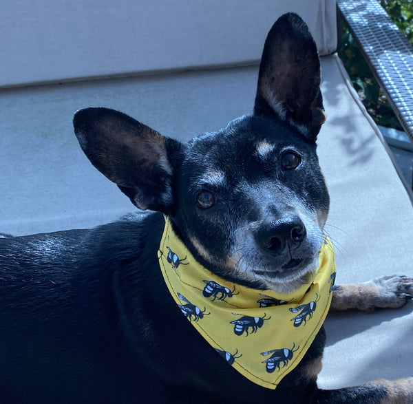 Bee Dog bandana