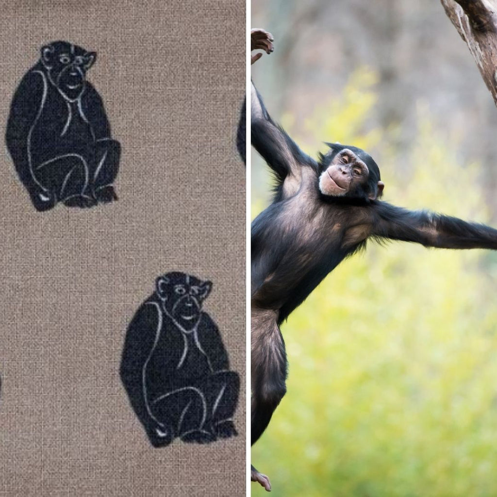 chimpanzee fabric