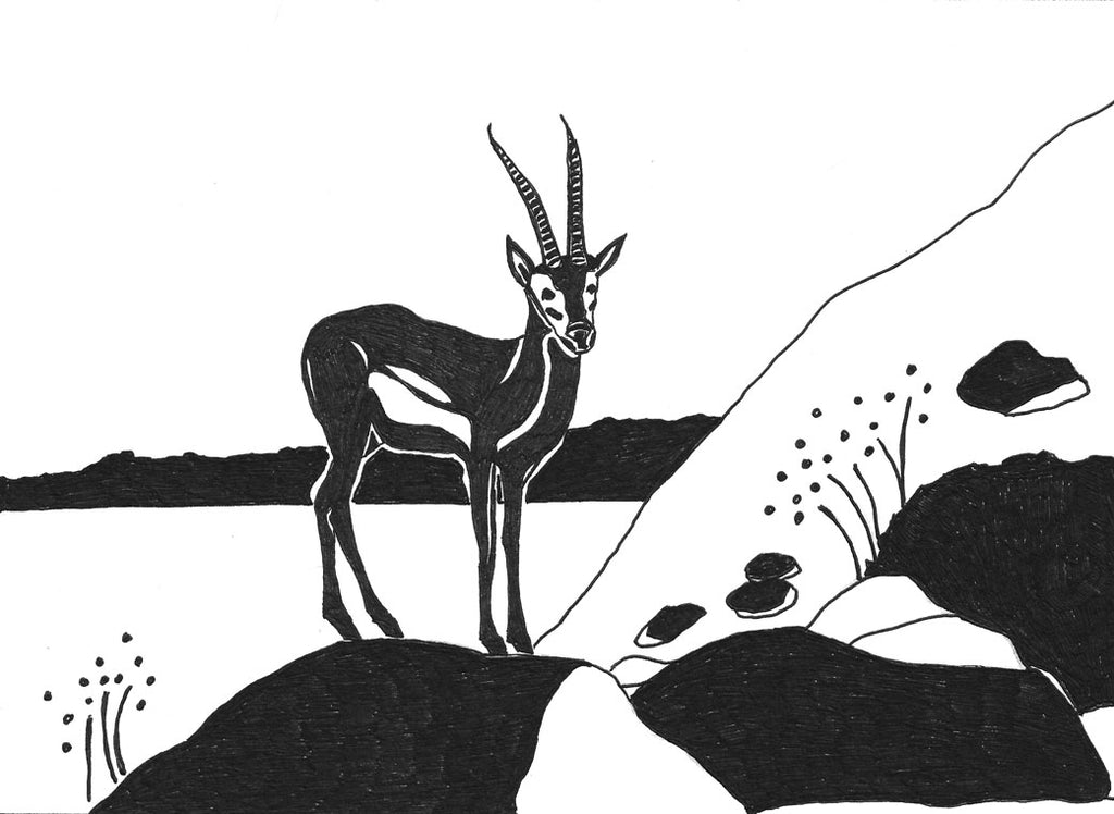 Mountain Gazelle Pen and Ink