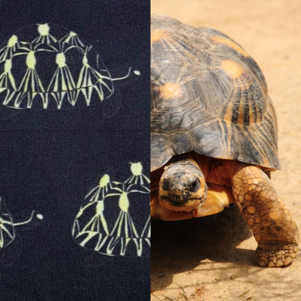 Radiated Tortoise print