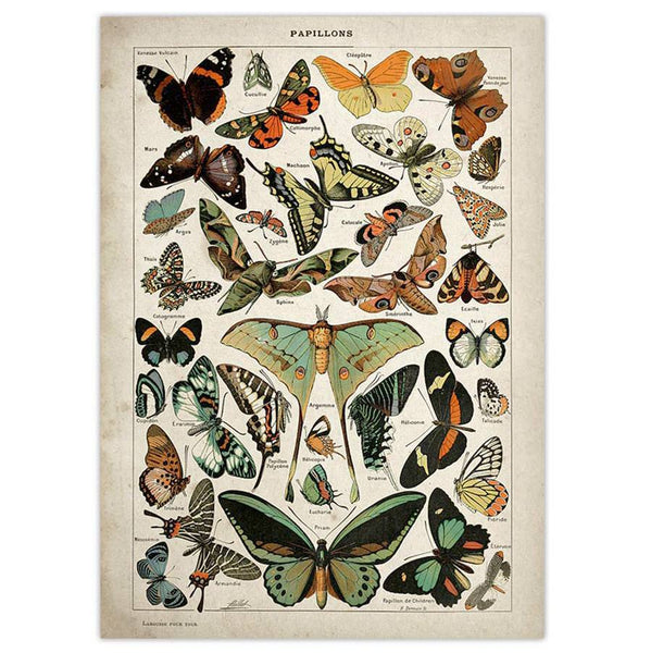 Papillons Vintage Poster