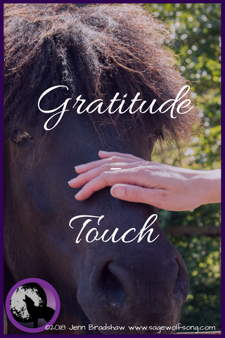 40 Days of Gratitude Blog Series Post - Touch - How the headbutt of a cat can lift my mood and ground me in the present moment.