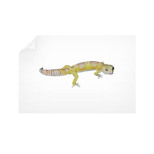 Horizontal Wall Decals Rachel Jensen Designs  sc 1 st  Rachel Jensen Designs - Shopify & Fancy Albino Leopard Gecko Horizontal Wall Decals u2013 Rachel Jensen ...