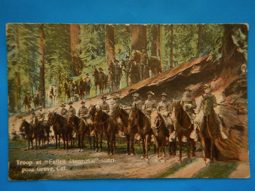CA, Mariposa Grove - Troop at FALLEN MONARCH, men on horses - D04015