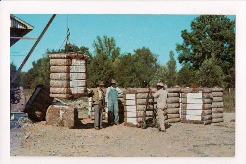 Black Americana - Bales of cotton finished by a Cotton Gin, men - C08488