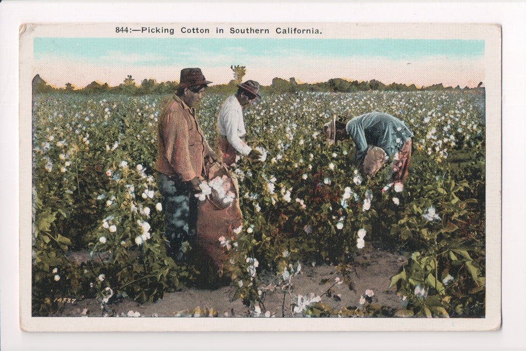 Colorful Postcard Americana And Black >> Black Americana Colored Workers Picking Cotton In Field Cp0396
