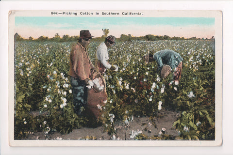 Black Americana - Colored workers picking cotton in field - CP0396