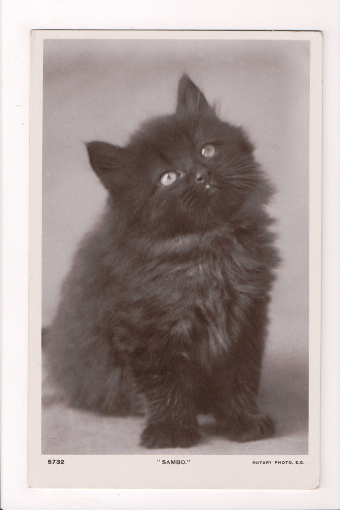 Animal - Cat or cats postcard - large black cat SAMBO - Rotary Photo - A04180