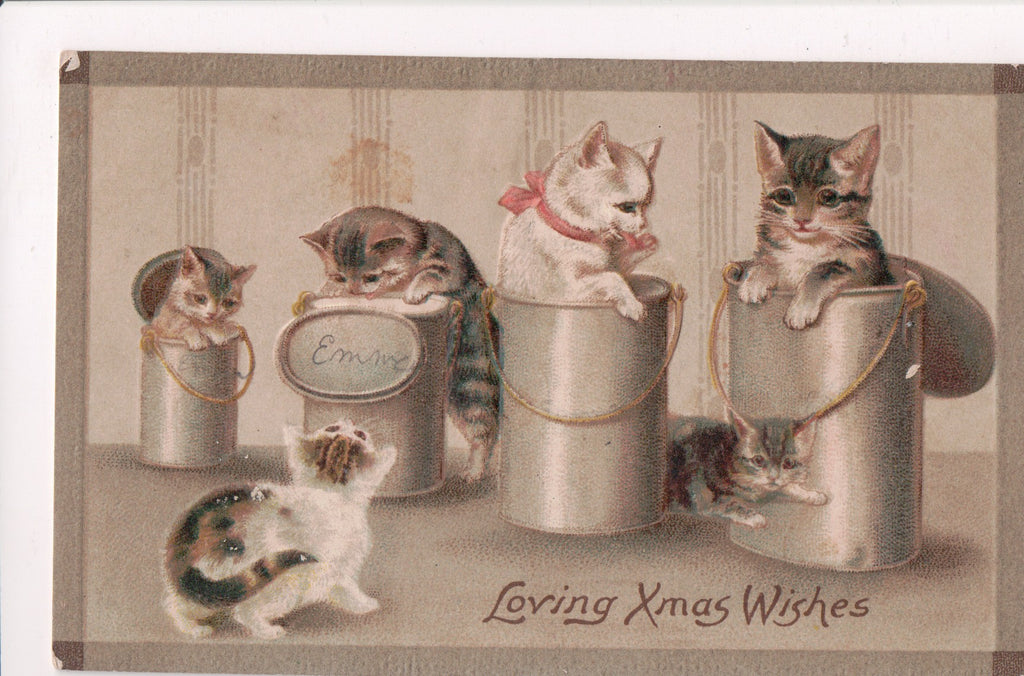 Animal - Cat or cats postcard - in and around metal containers - A06577