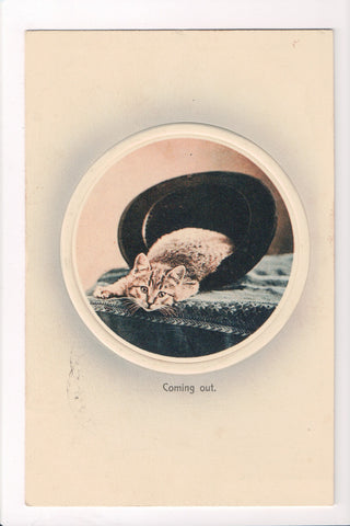 Animal - Cat or cats postcard - COMING OUT - laying in a hat - A06752
